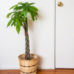 Five Houseplants that are safe for cats